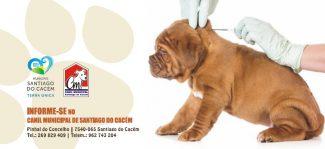 Campanha de Vacinação Antirrábica e Identificação Eletrónica: 379 canídeos vacinados e 134 microchips aplicados no Canil Municipal
