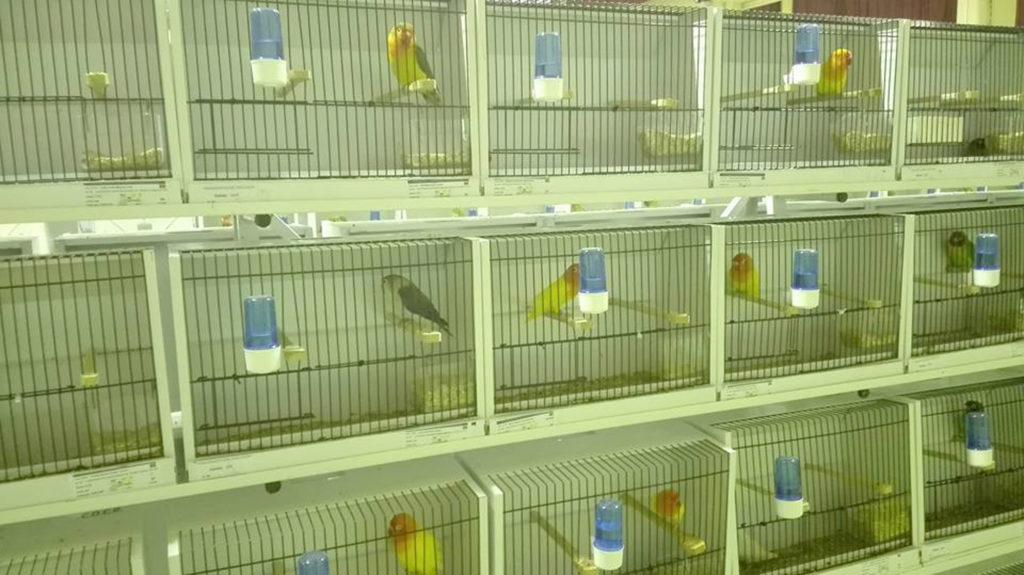 campeonato-nacional-ornitologia-06
