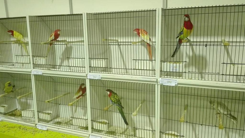 campeonato-nacional-ornitologia-07